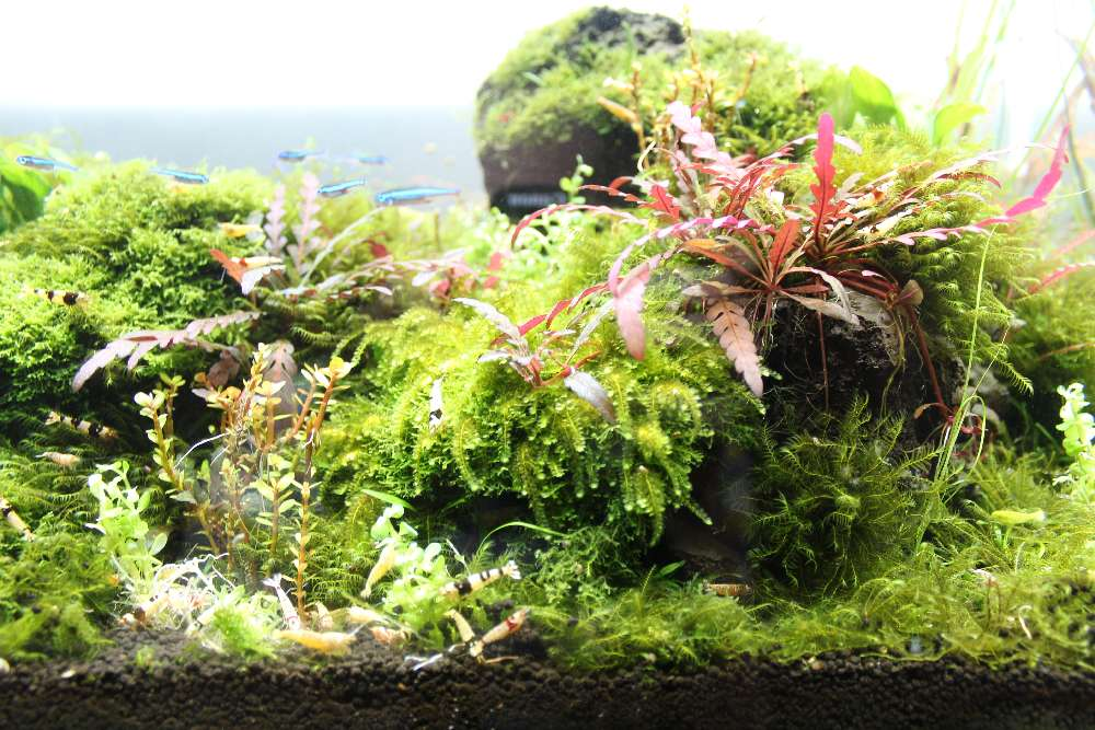 Teilausschnitt des Aquariums