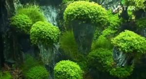 Fliegende Inseln im Aquascape