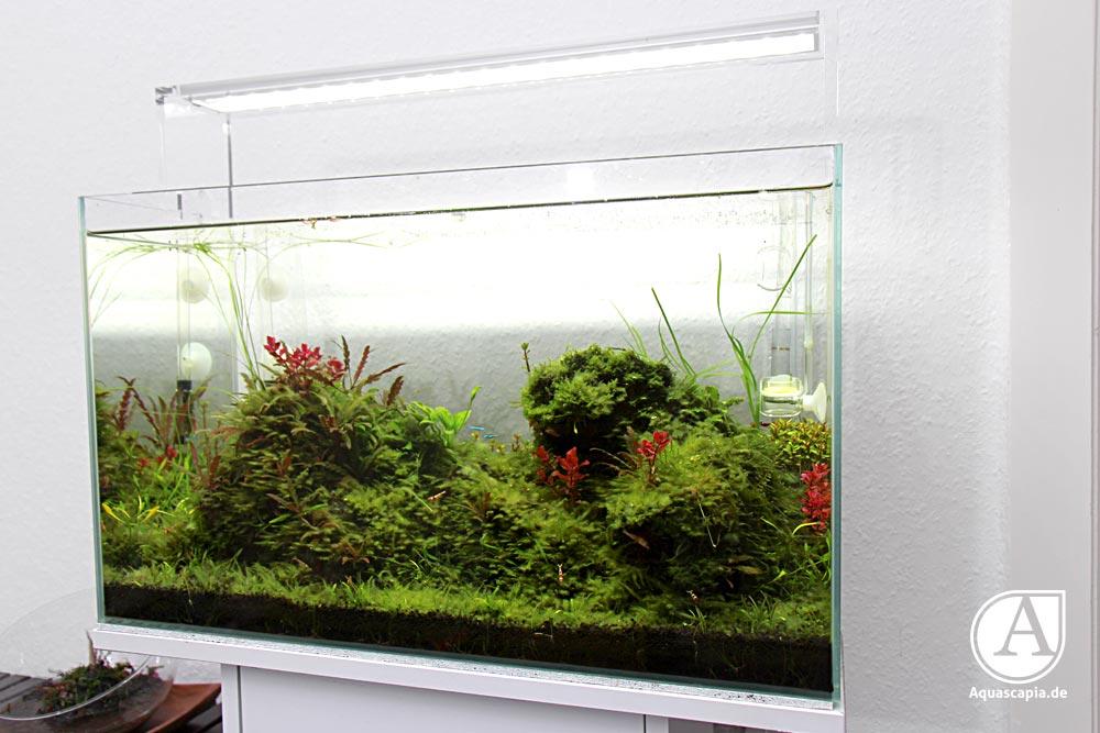 Aquascaping-Glasgarten-03-2014-1