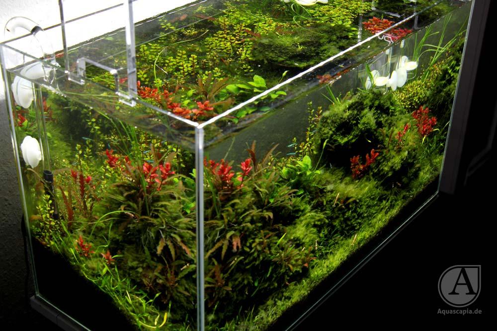 Draufsicht auf  Aquascaping Glasgarten