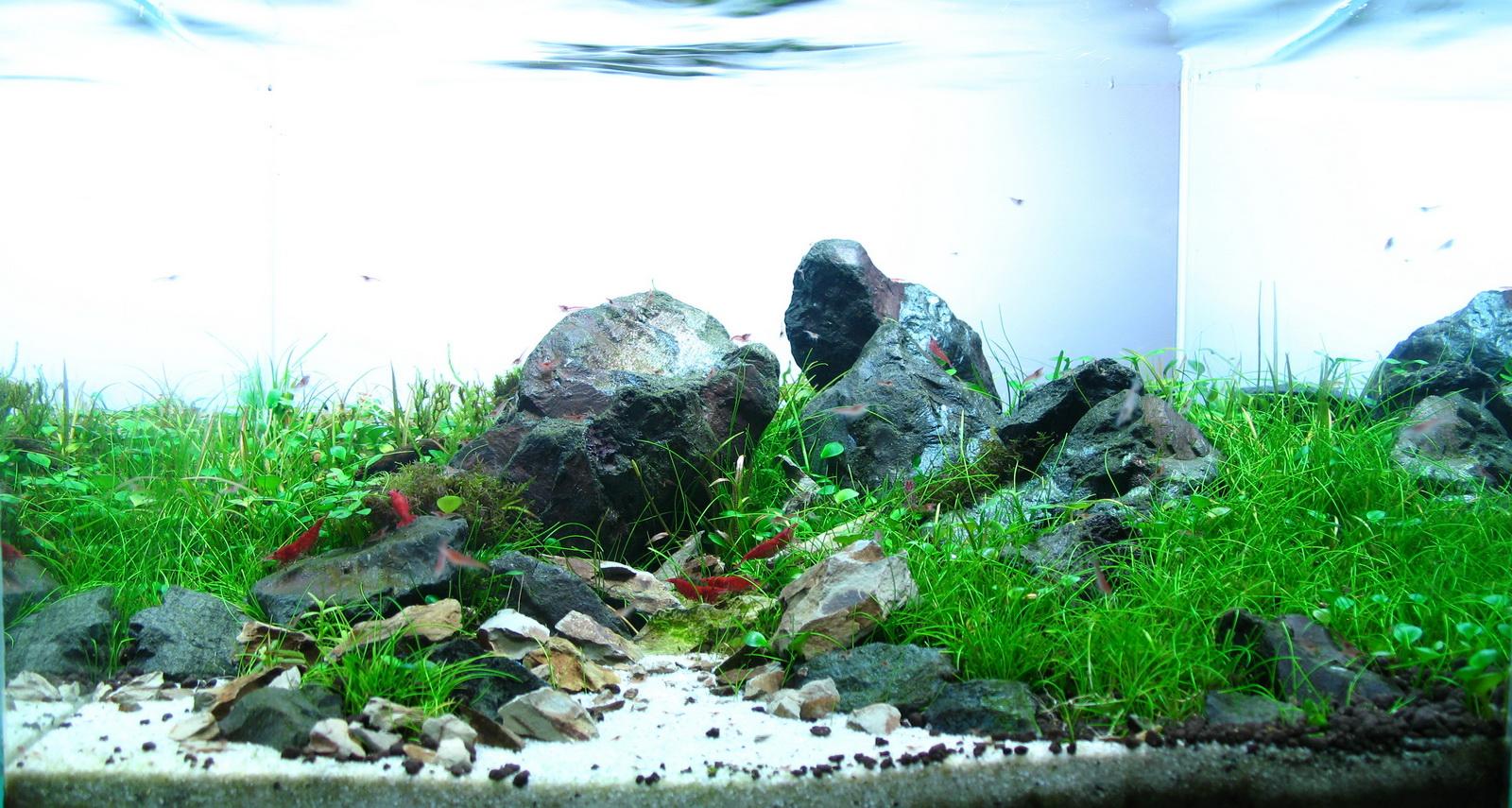��� Aquascaping Naturaquarium Und Aquariengestaltung