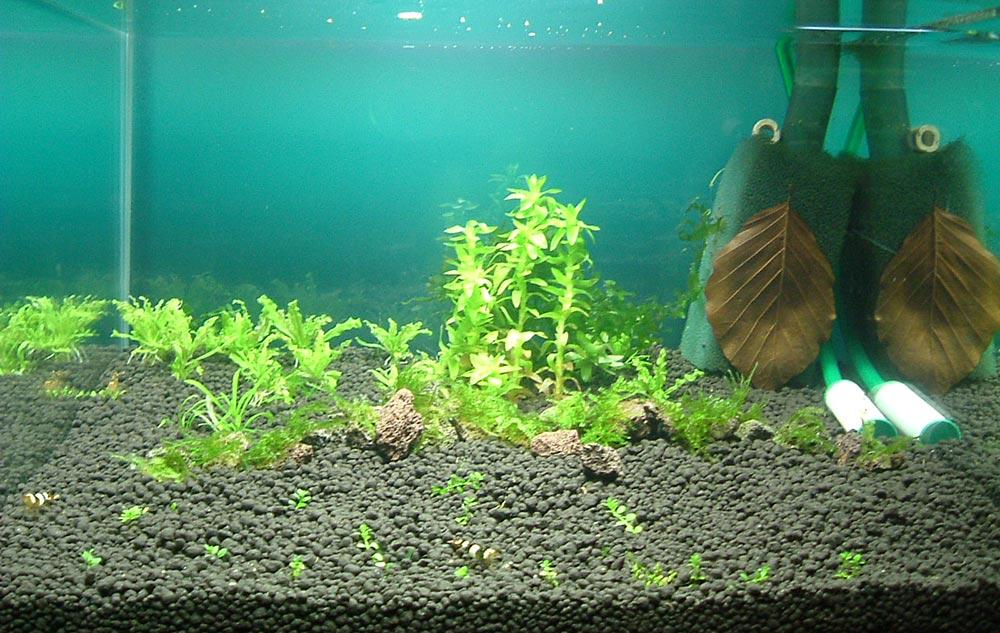 ��� Bodendecker Im Aquarium Top Pflanzen F 252 R Rasen Im Aquarium
