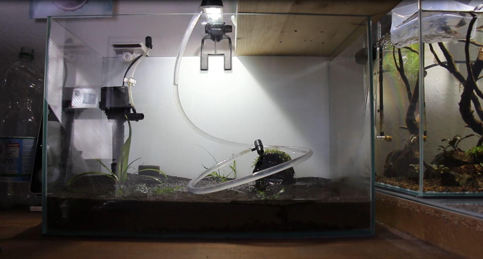 Garnelenaquarium einrichten Wassereinfuellen