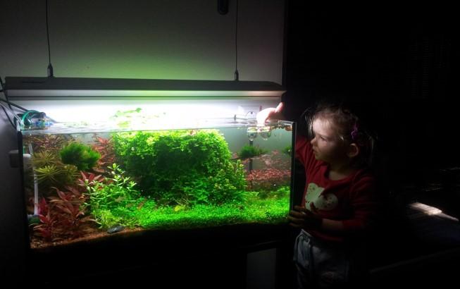 Pflanzen aus Aquarium fürs Wabi-Kusa
