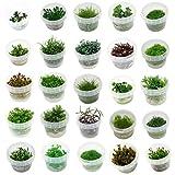 Naqua In Vitro Aquarium Pflanzen - Algen &...