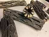 Cholla Cactus Wood (2 Stücke ca. Ø 2cm, 8 und...