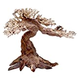 Amtra A8147657 Holz Oriental Wind 5, M