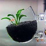 Plant Pot aus Glas
