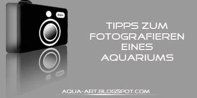Aquarium richtig fotografieren – so geht's