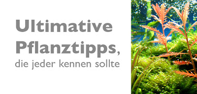 Ultimative Pflanztipps