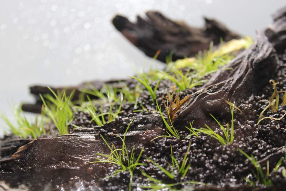 aquascapingdetail