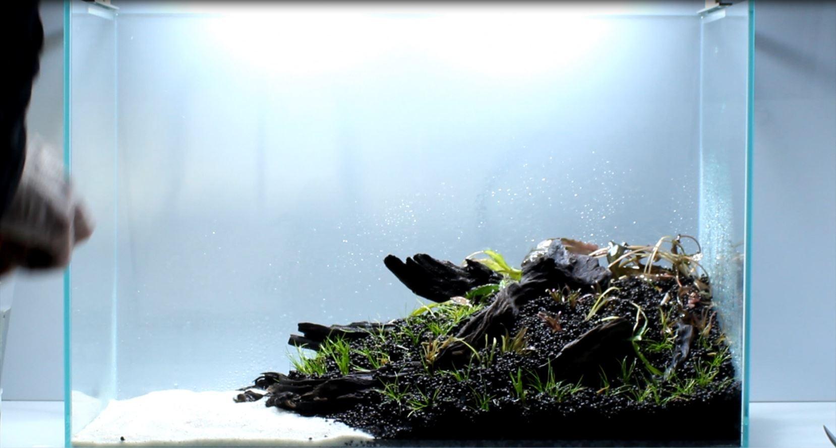 Einsetzen der pflanzen im Aquascape