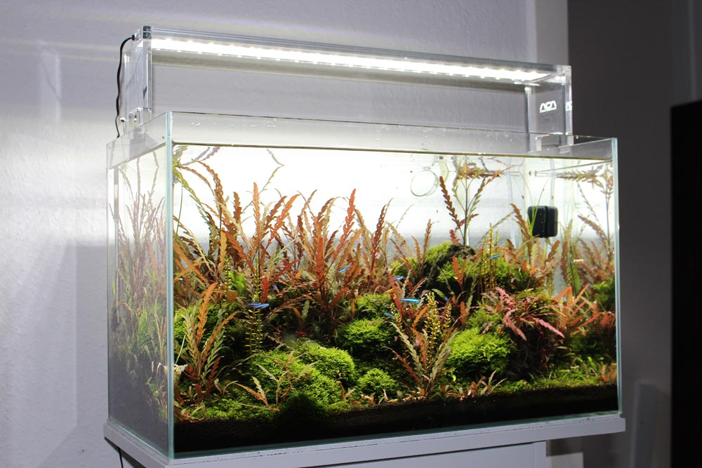 Aquascaping Glasgarten