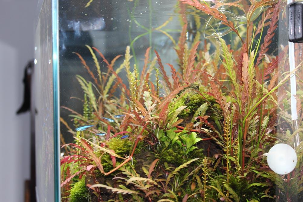 Rechte Seite des Aquariums