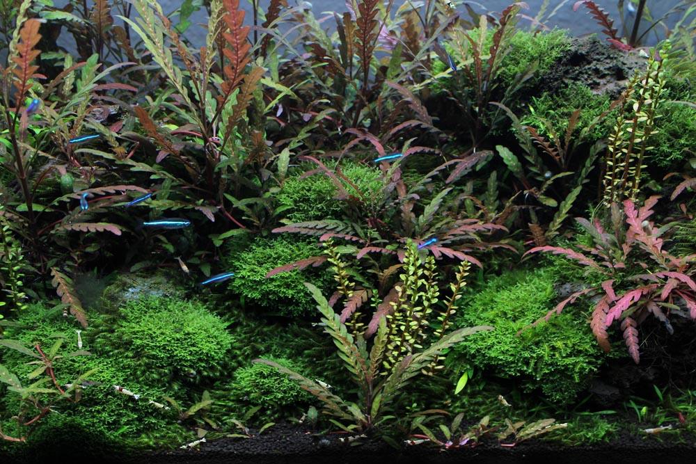 Aquariumausschnitt