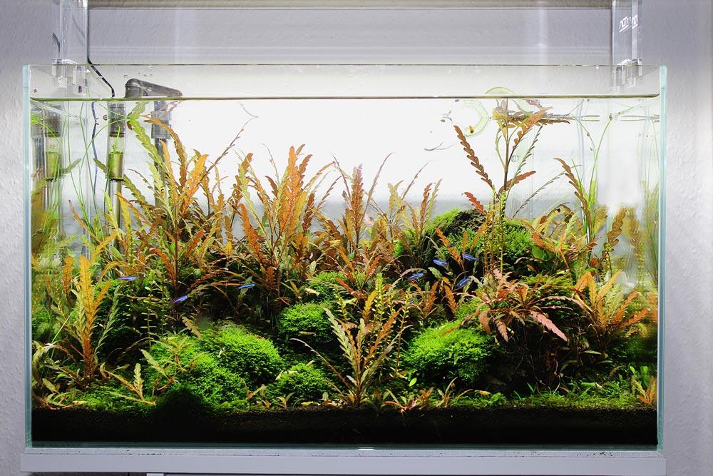 Glasgarten vorm Gärtnern