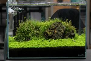 Ein Aquascape von Jurijs von Aquascaping Company