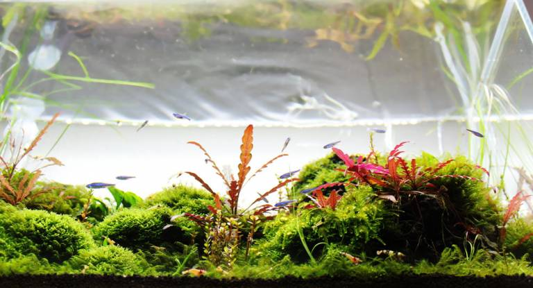 Aquascape für GAPLC Aquascaping-Contest