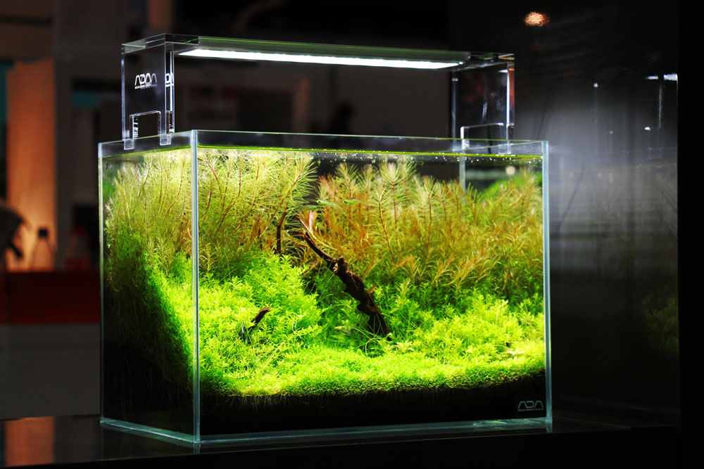 Aquascape von Wilko Priest
