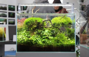 Aquascape von Andi Hofstetter