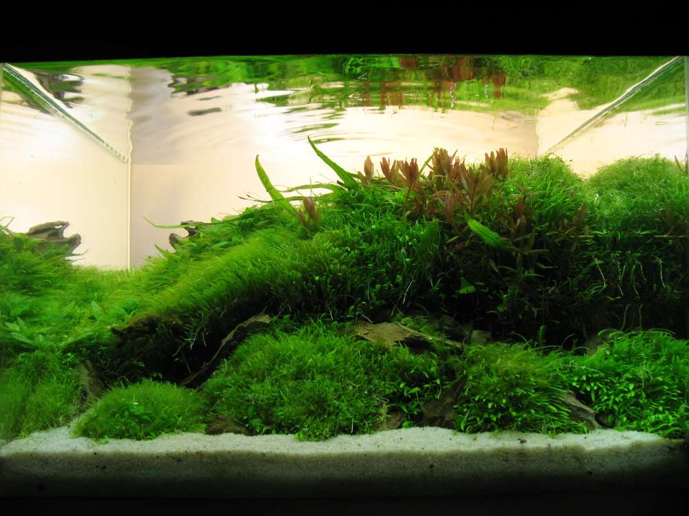 Nano Aquascape Sungreen
