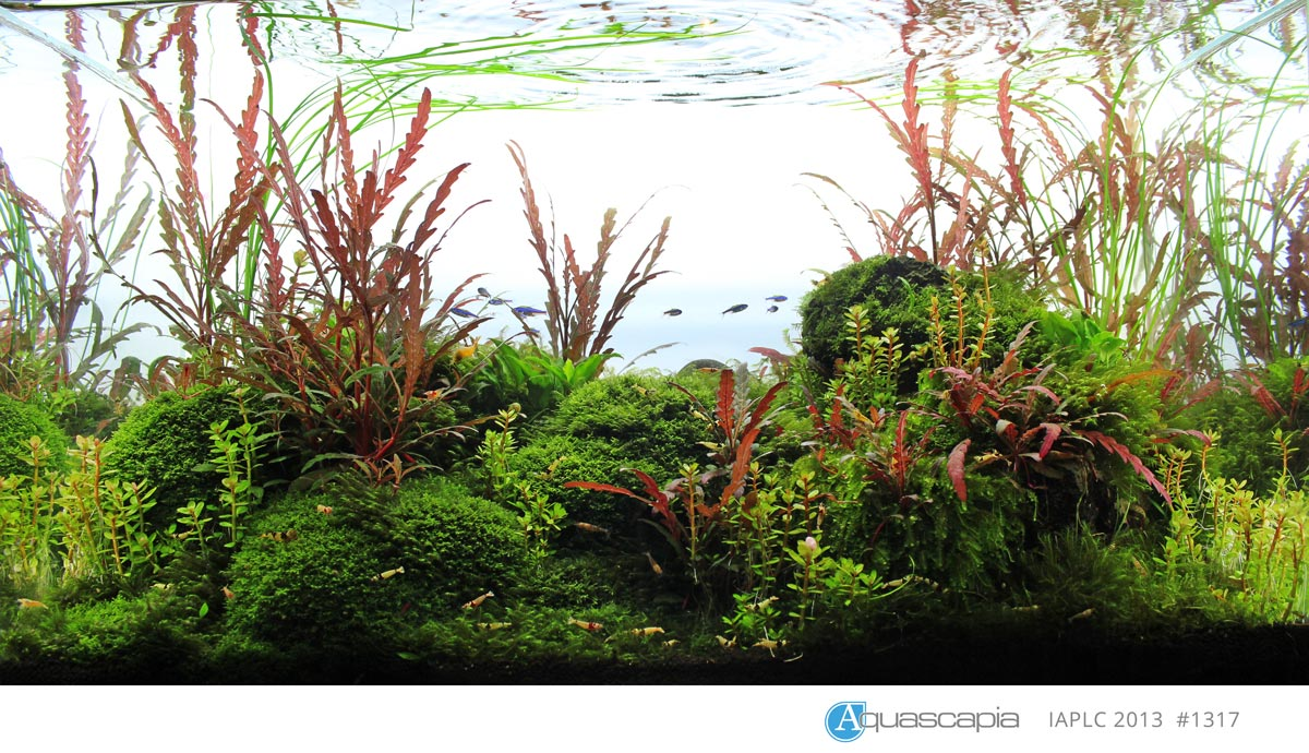Aquascape IAPLC 2013