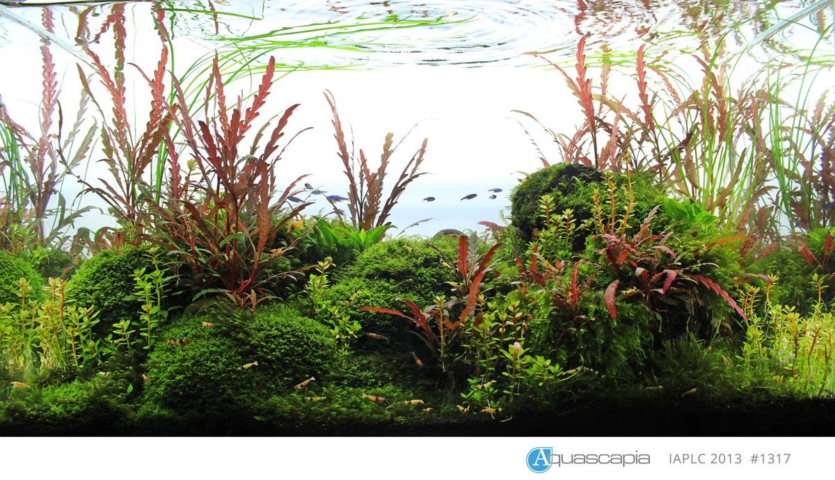 Aquascape IAPLC 2013