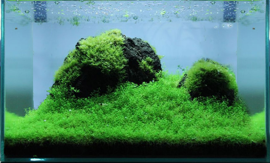 18 Liter Aquascaping-Layout
