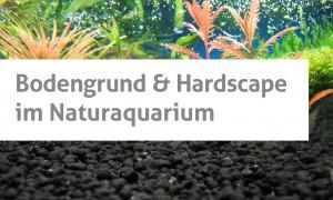 Bodengrund & Hardscape im Naturaquarium