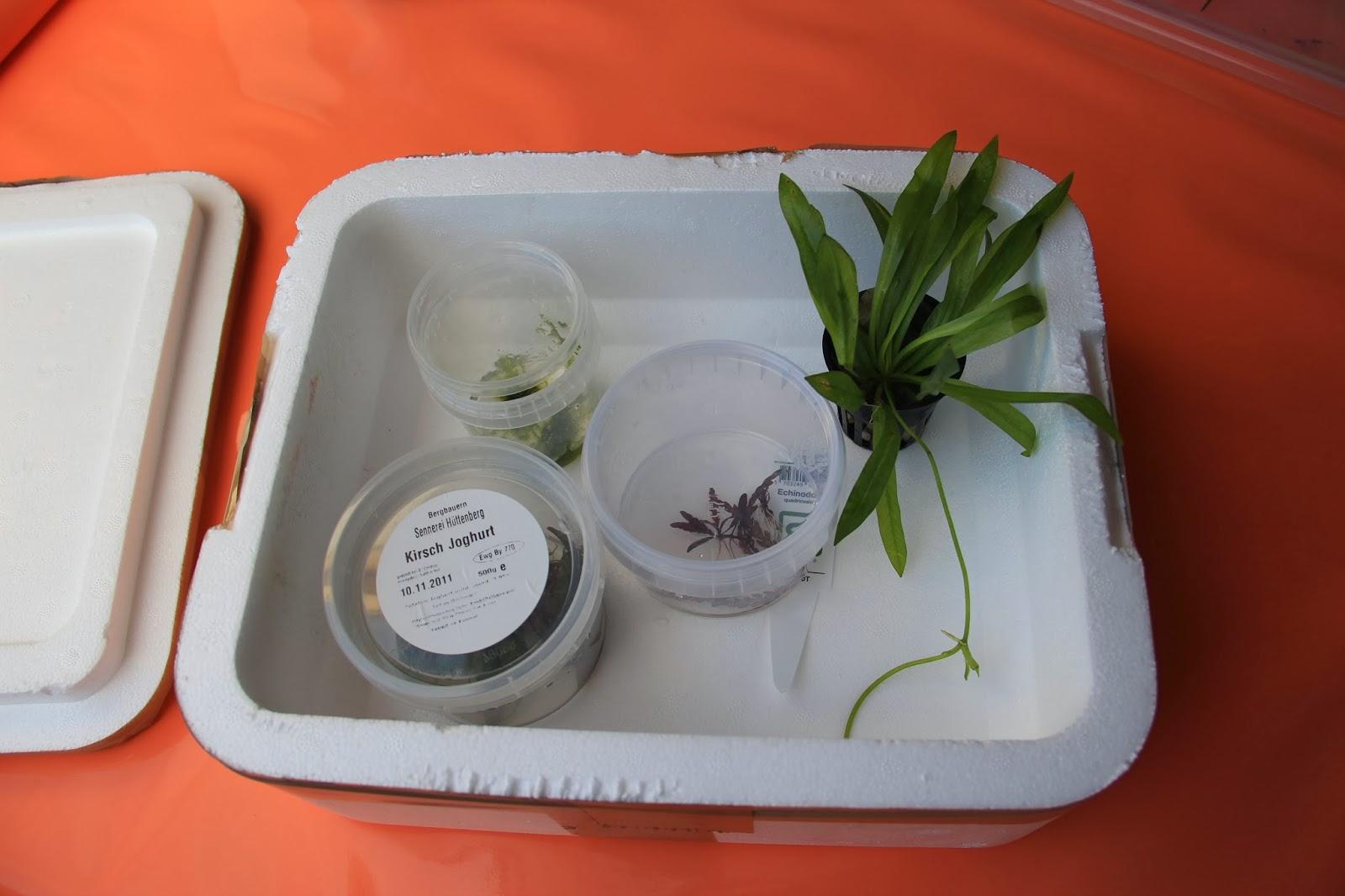 Pflanzen für Wabikusa