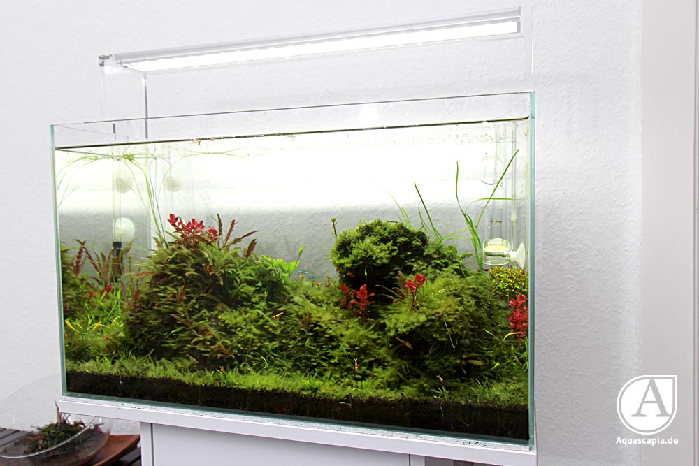 Aquascaping-Glasgarten-03-2014-1