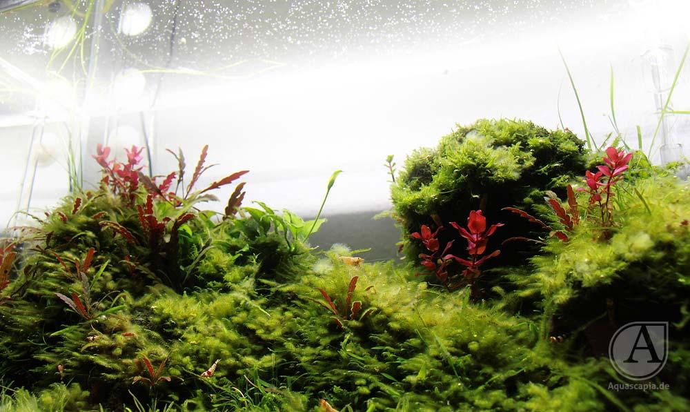 Detailansicht Pflanzen im Glasgarten