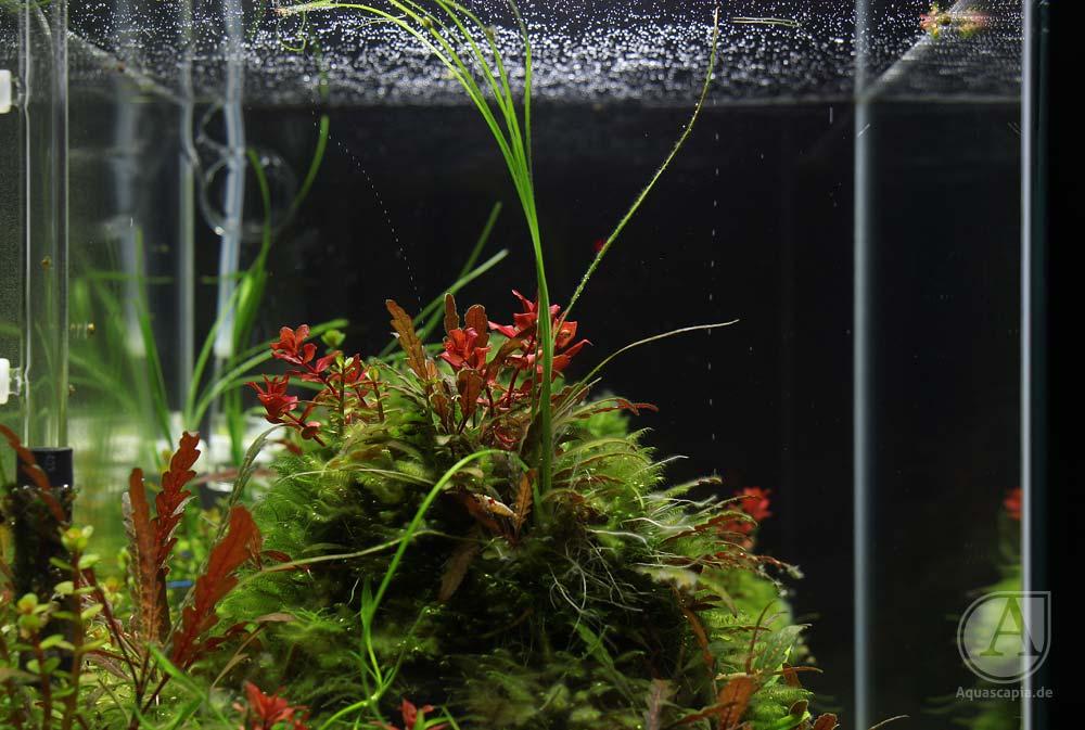 Pflanzenberg im Glasgarten-Aquascape