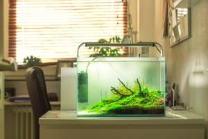 Aquascaping Contests 2014 – wie teilnehmen