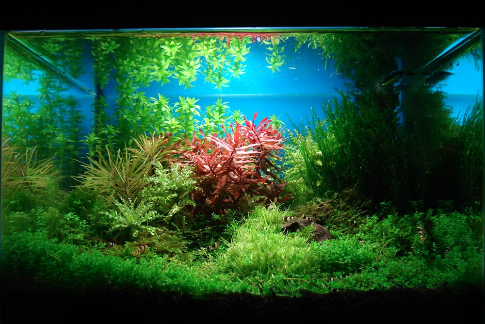 How To Aquascape An Aquarium How To Create Your First Aquascape Aquascaping Love The Majestic