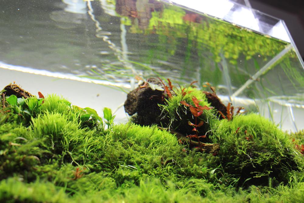 Klare Wasseroberfläche im Aquascape