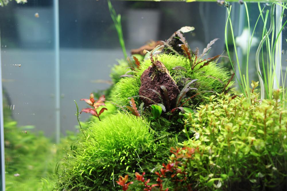 Twinstar Nano Erfahrungen: Glasgarten Aquascape von der Seite