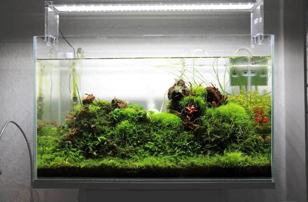 Twinstar Nano Erfahrungen: leichte Algen in der Frontansicht des Glasgartens zu erkennen