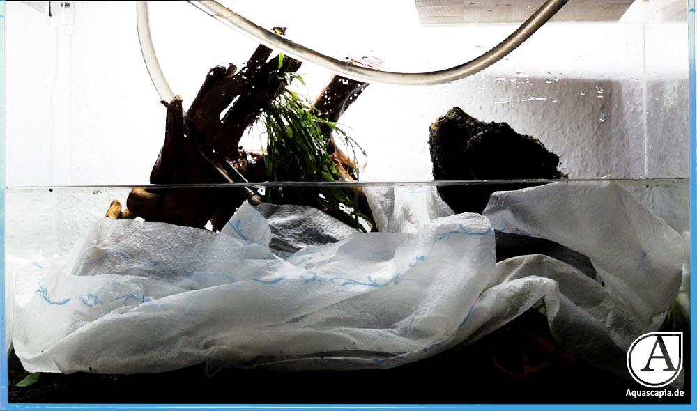 Glasgarten richtig befüllen