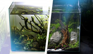 Aquascape Neueinrichtung