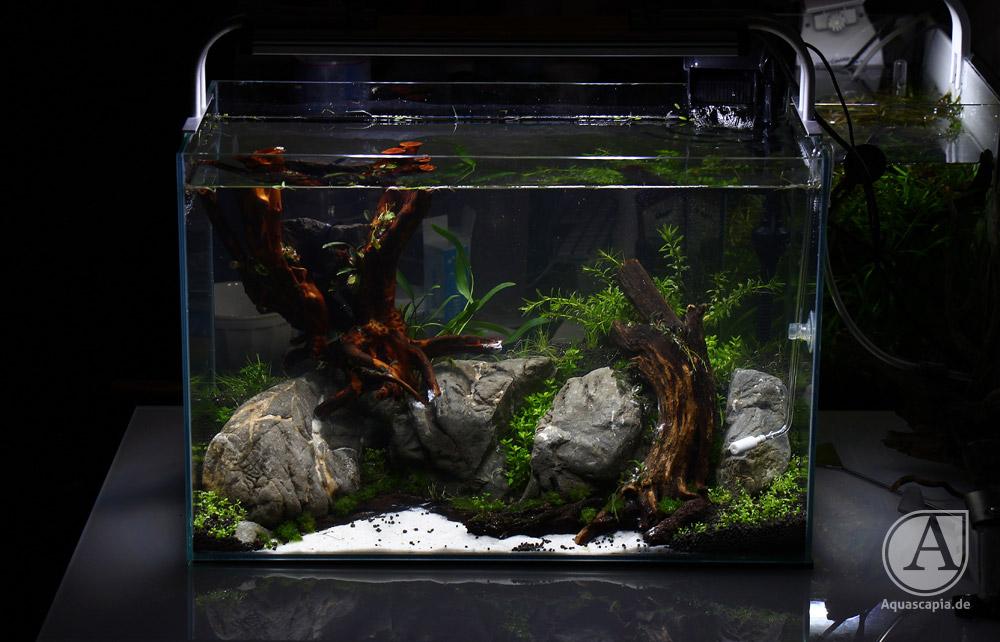 Aquascape eingerichtet 2