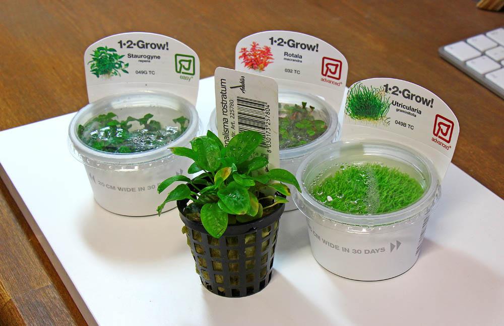 Invitro-Pflanzen fürs Wabi-Kusa