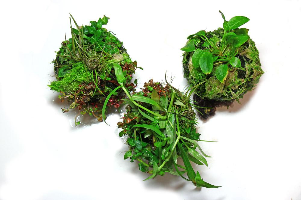Wabi-Kusa frisch bepflanzt