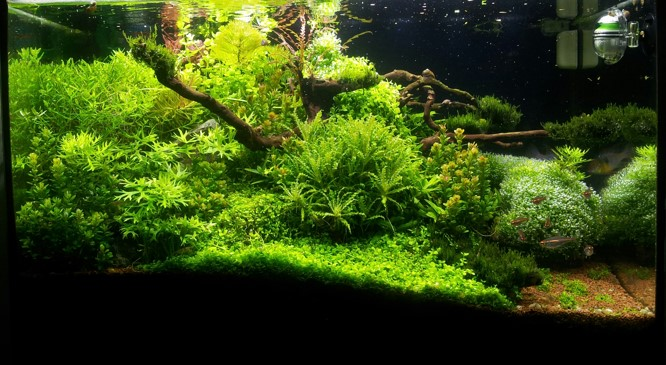 Grundstein-Aquascaping