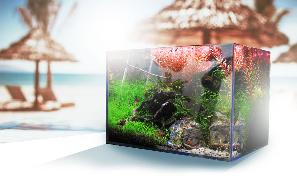 Aquarium im Urlaub