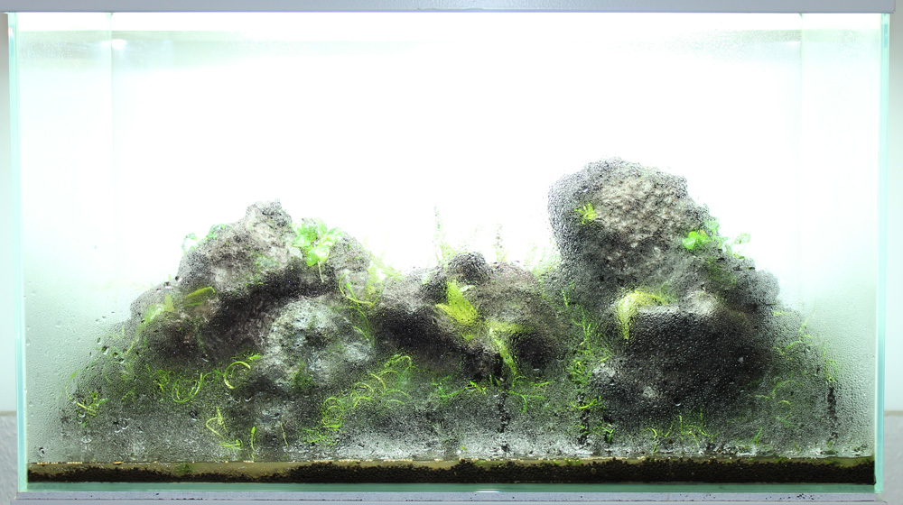 Dry-Start-Methode beim Aquascaping