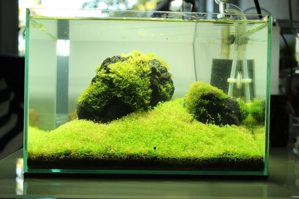 Nach Rüchschnitt der Wasserpflanzen