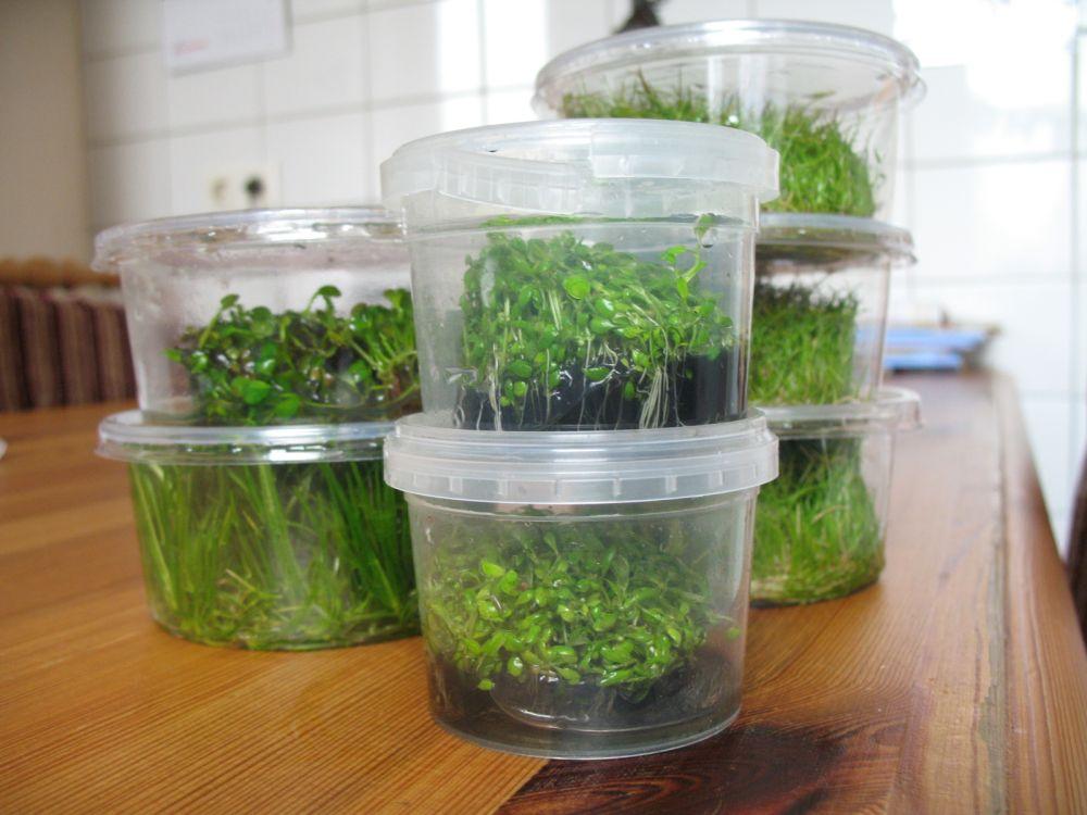 In-Vitro-Pflanzen als super Pflanztipp