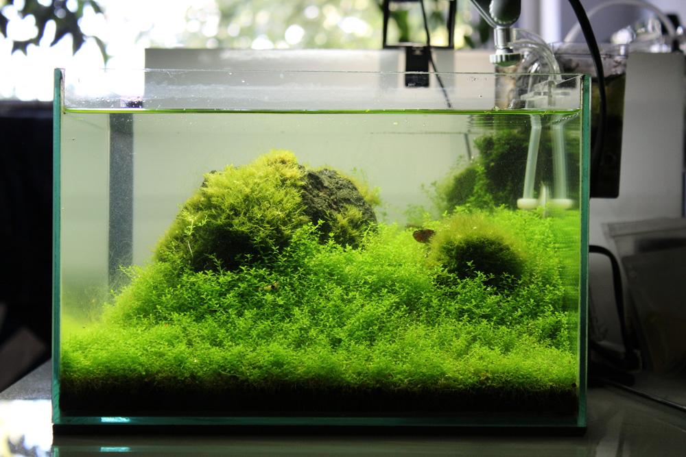 Vor dem Rückschnitt der Wasserpflanzen